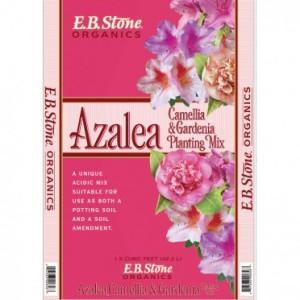 azalea-1_1